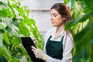 porträtt av kvinnlig ingenjör i bioteknik i växthus foto