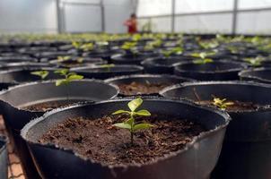 plantas en crecimiento foto