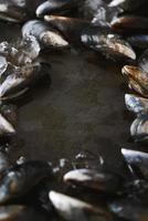 musslor som omger mörkt kopieringsutrymme foto