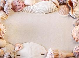 snäckskal gränsen med sand för kopia utrymme foto