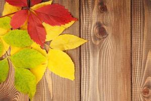 höstlöv över trä bakgrund med kopia utrymme foto