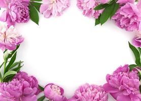 rosa pionblomma på vit bakgrund med kopieringsutrymme foto