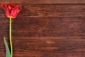 röd tulpanblomma på träbordbakgrund med kopieringsutrymme foto