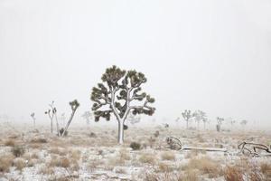 mojave desert blizzard joshua tree national park california copy space foto