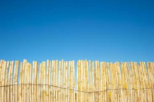 bambusträdbakgrund med blå himmel foto