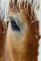 härligt brunt hästöga i vinterväder foto