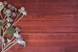 burdockblommor på ett trä med kopieringsutrymme foto