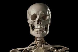 mänskligt skelett foto