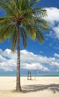 palmträdstrand foto