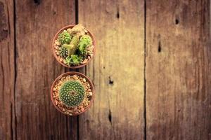 kaktus på nära håll foto
