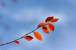 hösten på nära håll