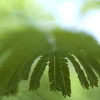 tropiskt blad på nära håll