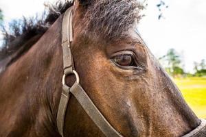 fullblodshäst på nära håll foto