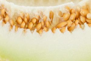 närbild av melon foto