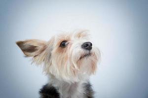 närbild porträtt hund foto