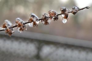 frusen gren på nära håll foto