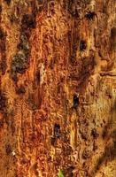 sjuk träd närbild