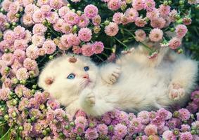 söt kattunge avkopplande i blommor foto
