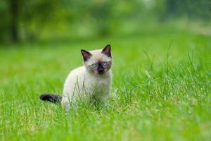 söt kattunge avkopplande på gräset foto