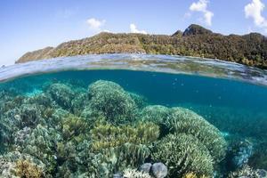 korallrev och öar i wayag, raja ampat foto