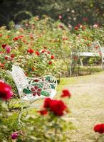 rosträdgård i avkopplande atmosfär