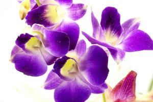 närbild lila orkidé