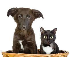 katt och hund tittar på kameran foto