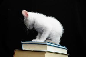 vit ung baby katt foto