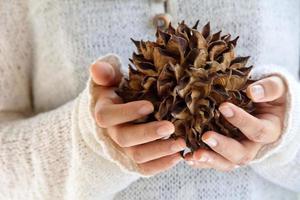 hand som håller naturligt spiky träd foto