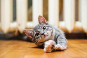 inhemska lat korthårig ung vispad katt som ligger och sträcker sig foto