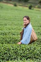 asien vacker kvinna som plockar teblad i plantage, livsstilskoncept foto