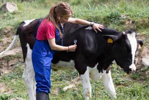 veterinär på en gård foto