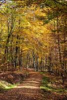 i skogen foto