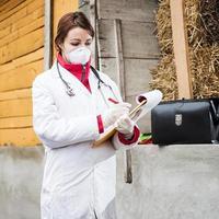 veterinär som undersöker gris. foto