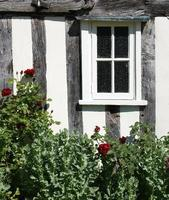 fönster och rosebusk foto