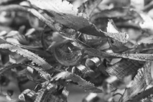 spån av metall foto