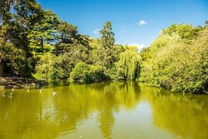 gröna träd över liten sjö foto