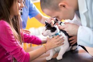 veterinär som undersöker kattens hörsel hos veterinärambulant foto