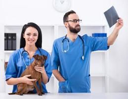 veterinär foto