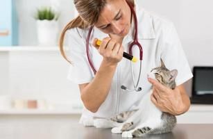 veterinärklinik med en kattunge foto