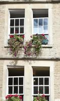 fönster och blommor foto