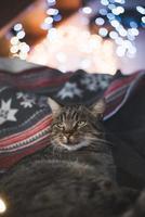 bedårande katt som ligger i sängen foto