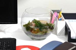 gör grönt med terrarium. foto