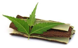 medicinska neemblad med bark av träd foto