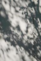 trädskugga på det vita betongväggsmönstret foto