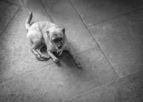 tålmodig hund foto