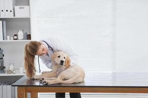 veterinär som kontrollerar en liten hund foto