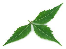 medicinsk neem blad foto