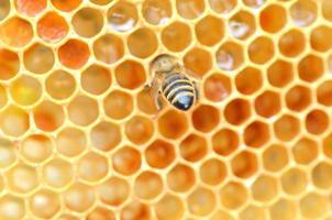 närbild av bi på honungskaka i bigården foto
