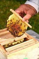 bin på liten bröllopshonungskaka som hålls av apiaristen foto